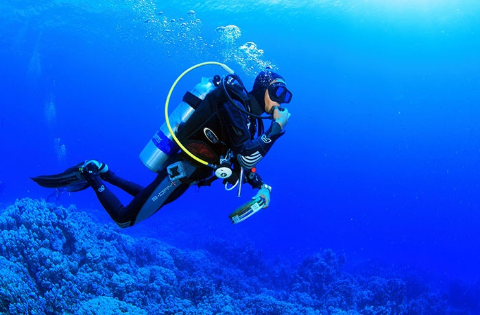 Diving Tours From Portghalib