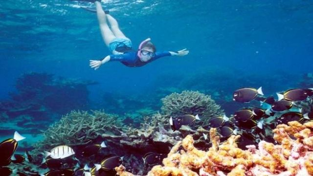Snorkeling Trip At Satayh Dolphin Reef from Portghalib