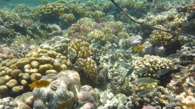 sharm el naga bay snorkeling trip from El Gouna Egypt Red Sea