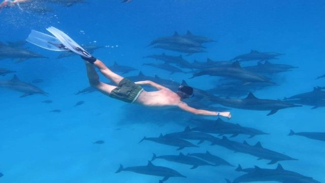 snorkeling trip to the dolphin house from hurghada