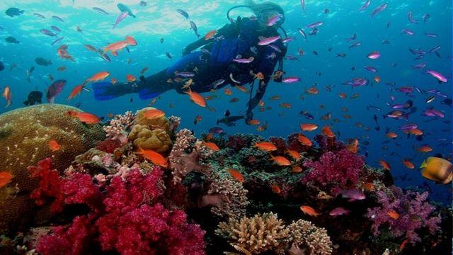Tag Tauchen Makadi ägypten Rotes Meer
