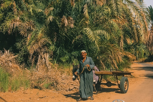 Bahariyia Oasis