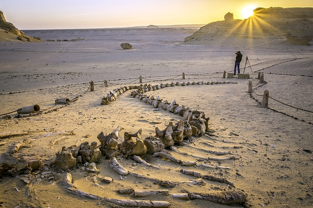 3 Days trip wadi el Hitan and Fayoum Oasis from Cairo