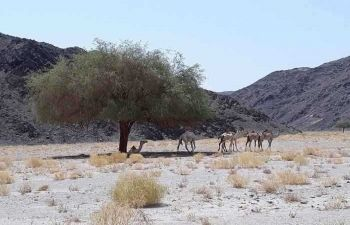 Wadi El Gemal Excursions in Marsa Alam