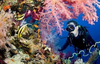 day scuba diving Makadi Egypt Red Sea