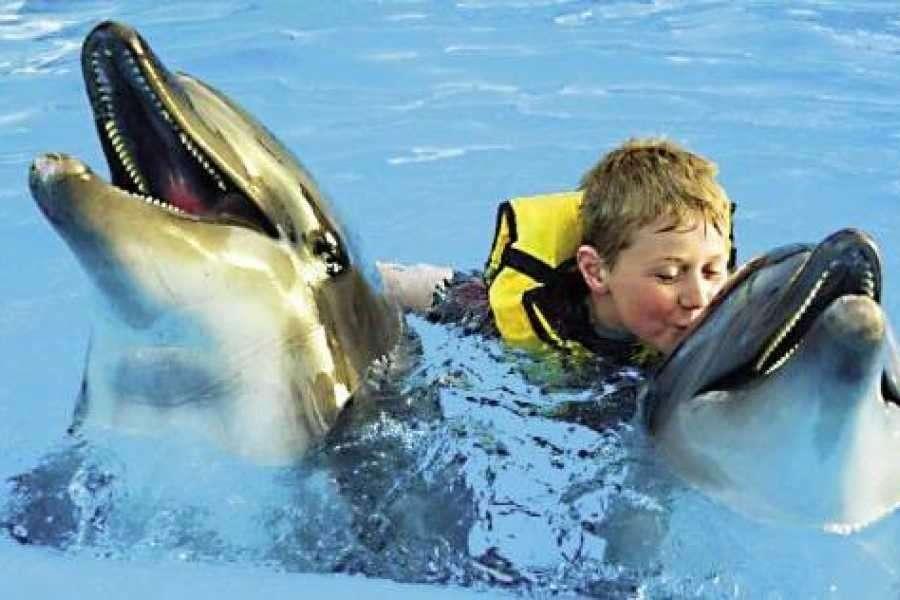 Nuotare con i delfini a hurghada